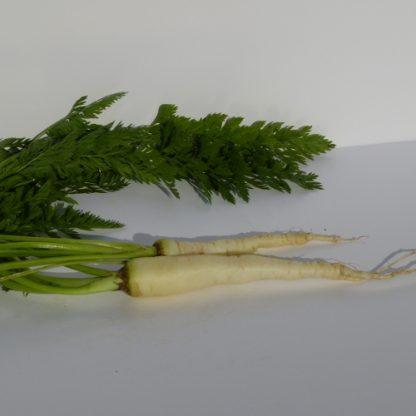 carotte blanche