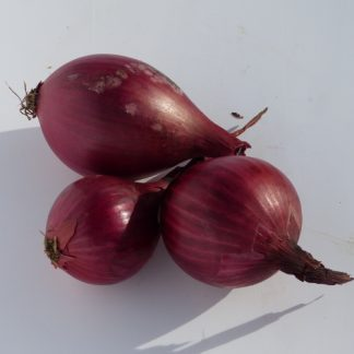 oignons rouges